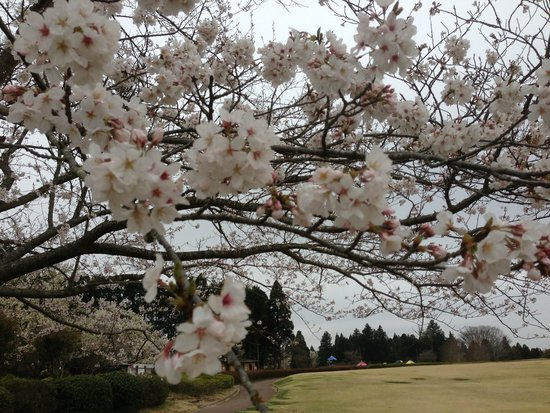 Showa no Mori Park: 2013年3月24日