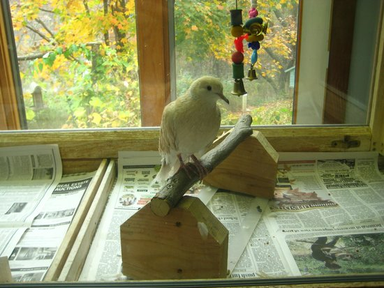 Ansonia, CT: A little birdie inside the nature center.