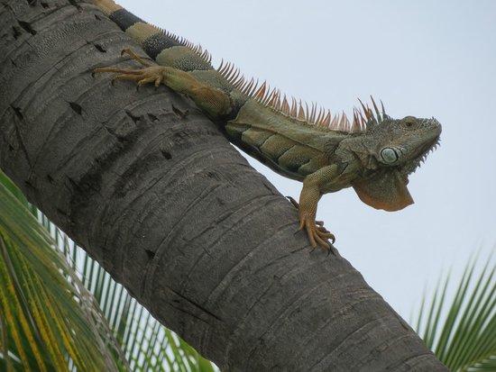 Hard Rock Hotel Vallarta: local wildlife