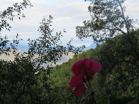 Enis Monte Maccione: Panorama