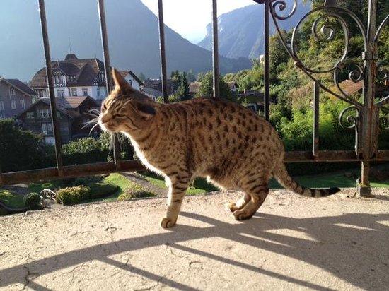 The Park-Garden Hotel at Mattenhof Resort: Cat enjoying the view