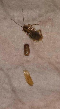 AmericInn West Burlington: bugs in room