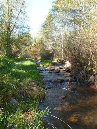 Kohl's Ranch Lodge: The creek by the lodge