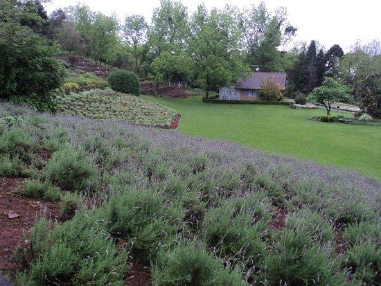 Planta ex tica foto di le jardin parque de lavanda for Jardines de lavanda