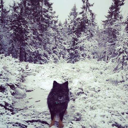 Nordmarka : Mellomkollen