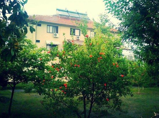 Hotel Viktoria: Garden