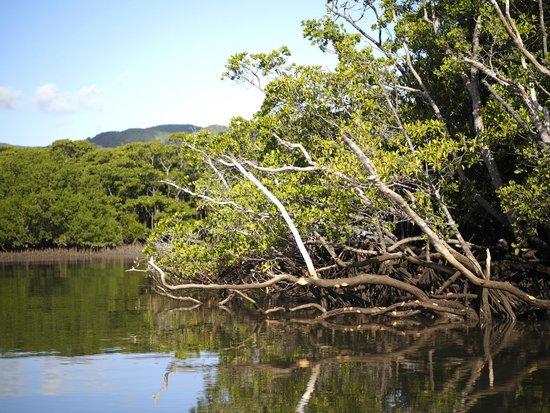 Nakama-river Protected Region : 風景
