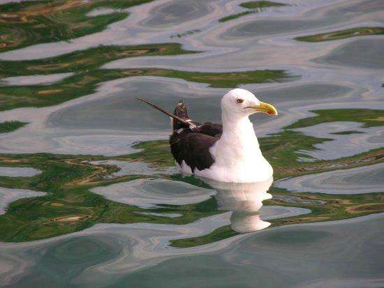 Papagaios Island: Muita Paz