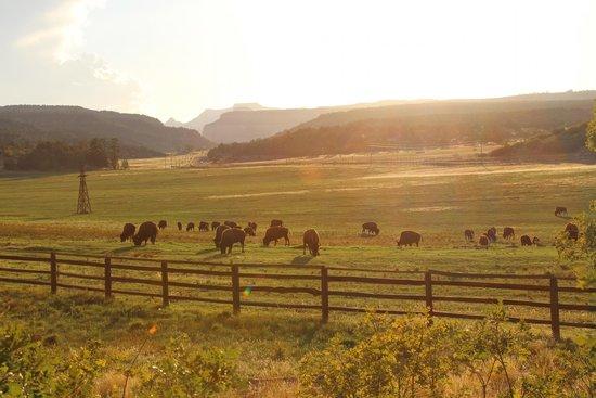 Zion Mountain Ranch Photo