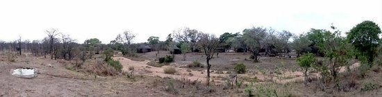 Shindzela Tented Camp: The Camp