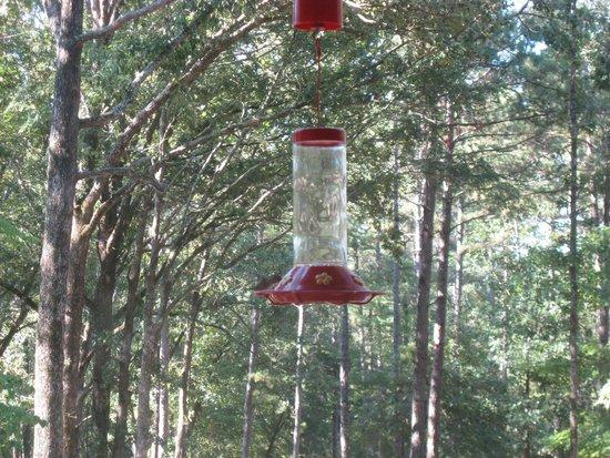 Country Charm Log Cabins: Hummingbirds