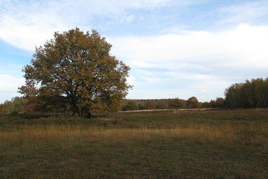 Hoge Kempen National Park : Mechelse Heide