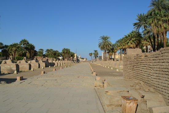 Avenue of Sphinxes : Avenida das Esfinges, Luxor