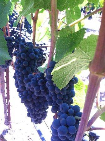 Anaba Wines: Pinot Noir