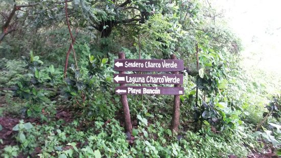 Charco Verde: different paths