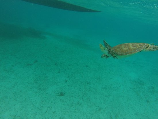 Chuck and Robbie's : sea turtle
