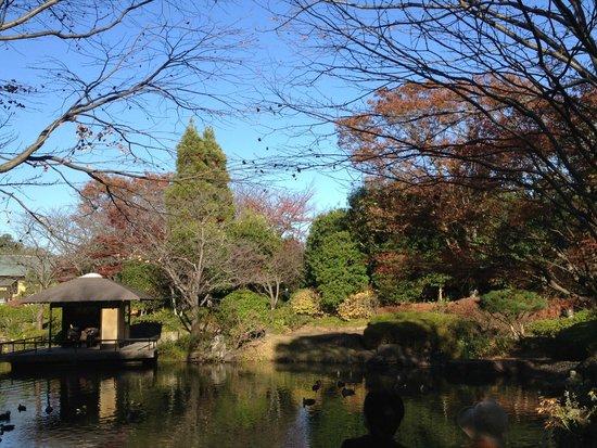 Taman Kashiwanoha Chiba