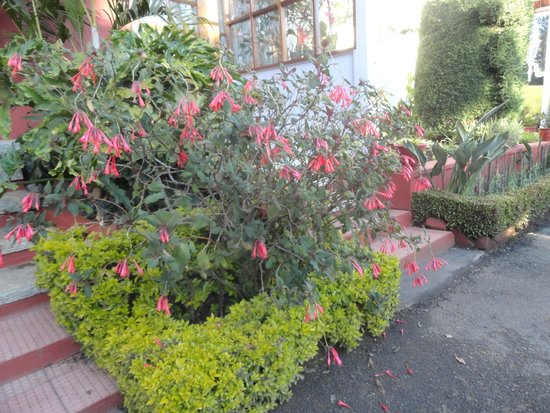 Kluney Manor: More flora