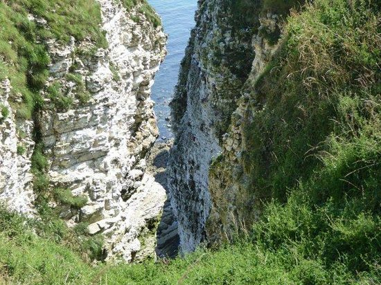 RSPB Bempton Cliffs-WALKS AND BIRD VIEWS