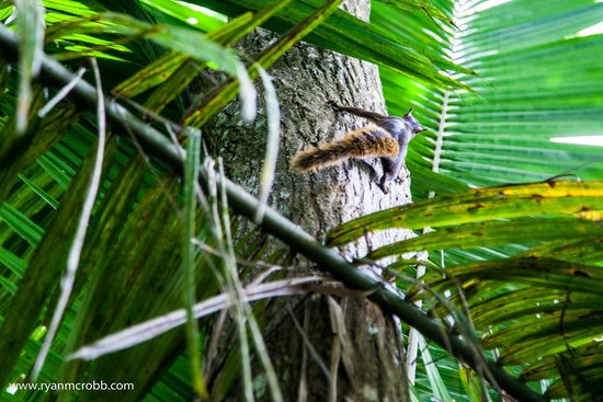La Chosa del Manglar: A squirrel escapes up a tree at the rear of the hotel