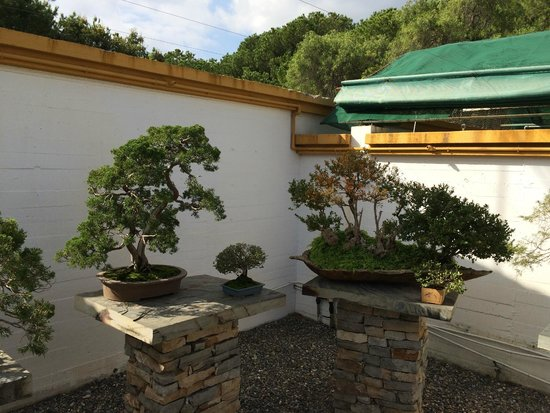 Museo del Bonsai: Экспонаты музея бонсай