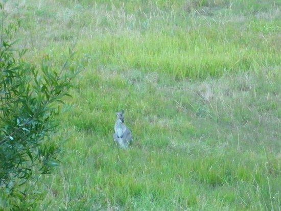 Clarendon Forest Retreat: native wildlife all around