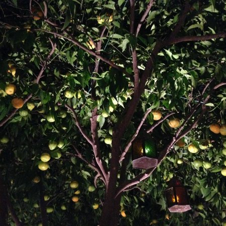 Riad Clementine: patio