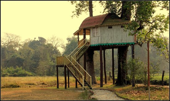 Gorumara National Park, India: Gachbari or tree house