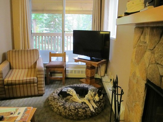 Living room dog sleeping on borrowed dog bed Picture of Banff – Sleeping in the Living Room