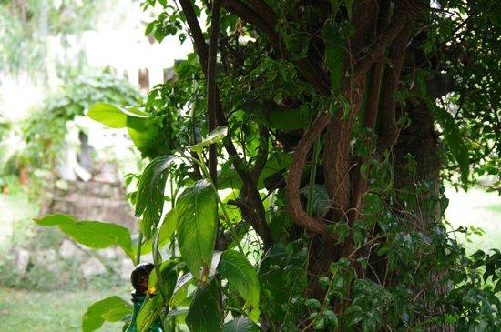 Bed & Breakfast Il Giardino Segreto: Nell giardino