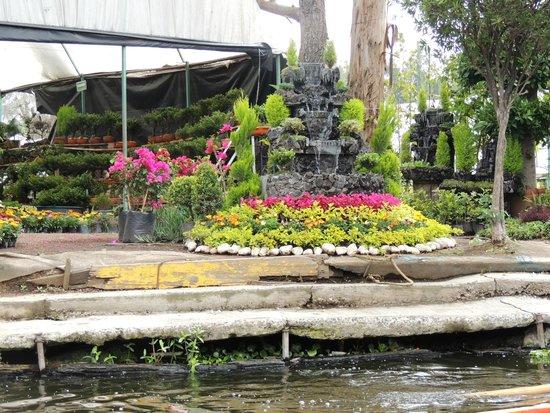 foto de xochimilco ciudad de m xico vendedores de flores