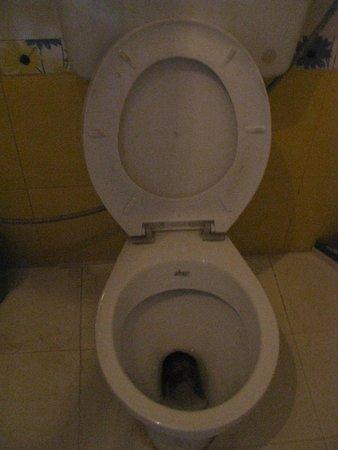 Hotel Moonlight Pushkar : туалет блистает чистотой