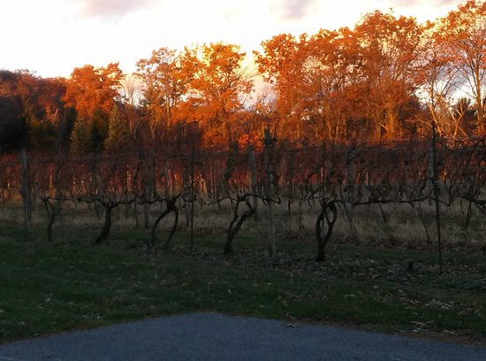 Mount Nittany Vineyard & Winery: The Vineyard