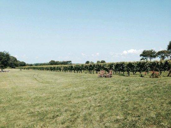 Carolyn's Sakonnet Vineyard : beautiful grounds