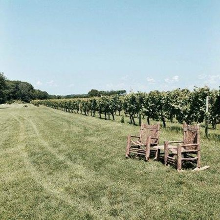 Carolyn's Sakonnet Vineyard : relaxing