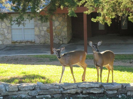 The Lodge at Turkey Cove: local deer
