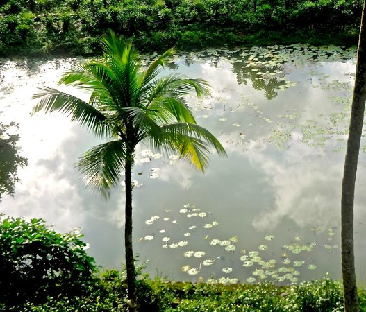 Ratnaloka Tour Inn: a pond surrounded by tea plants and many other trees. ideal for bird watching from your room.
