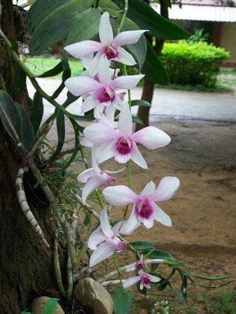 The Legacy River Kwai : super jardin