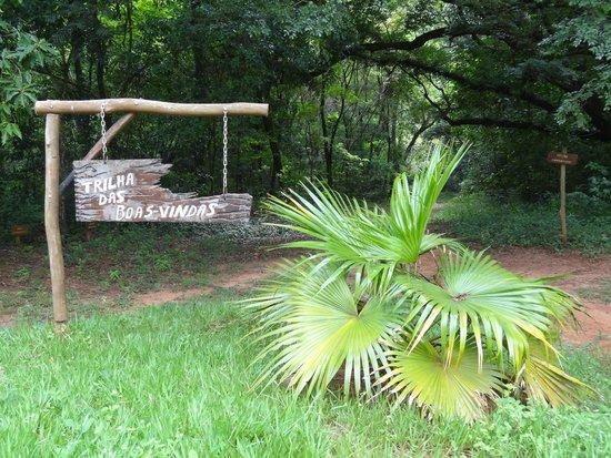 Horto Florestal de Bauru