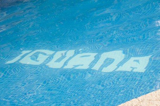 Cabinas Iguana: Pool
