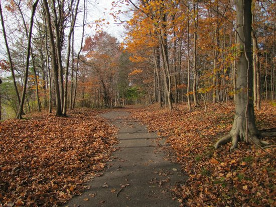 Eagle Creek Park : Trail in fall