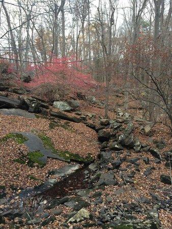Arrow Park : Hiking Trail