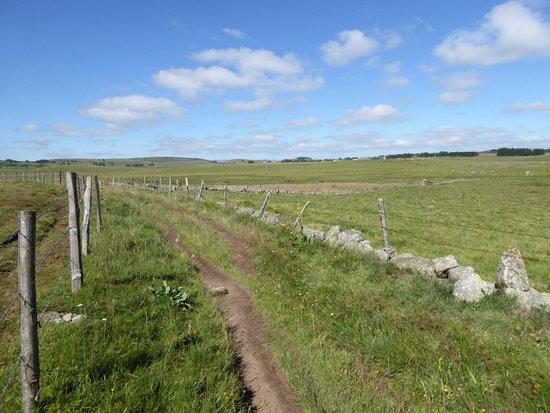 L Aubrac: Les prés bordés de murets de pierres et de clôtures en bois