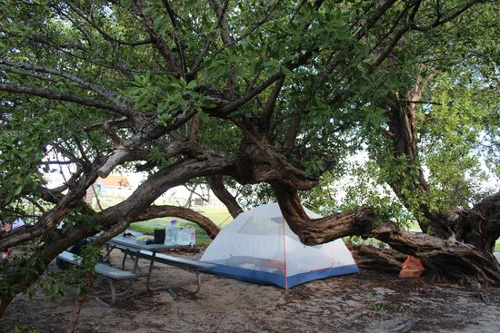 Campsite number 6 picture of garden key dry tortugas national park tripadvisor for Garden key dry tortugas national park
