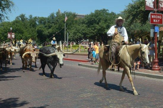 La Mandria Foto Di Fort Worth Herd Fort Worth Tripadvisor