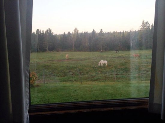 Mahoosuc Inn: View from our window in the morning!