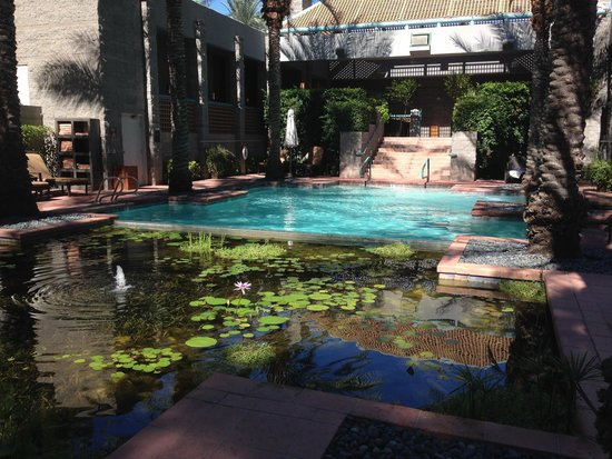 Pool and koi pond picture of spa avania scottsdale for Pool with koi pond