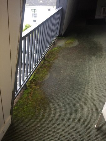 Linnell Motel & Rest Inn Confrence  Center: Moss on balcony