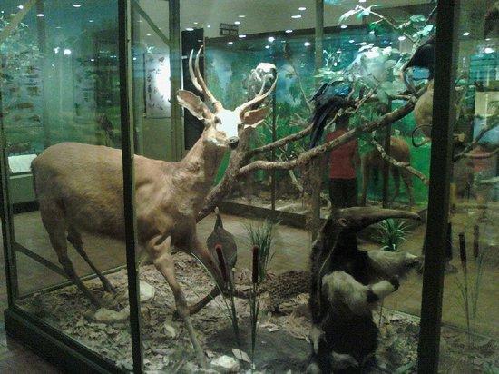Aquatic and Natural History Museum: vista interna