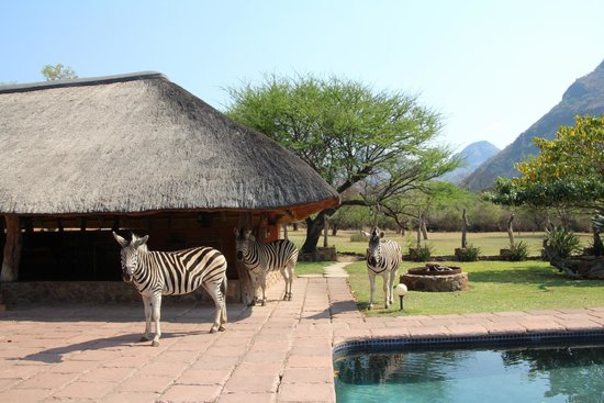 Blyde River Canyon Lodge: Friendly wildlife